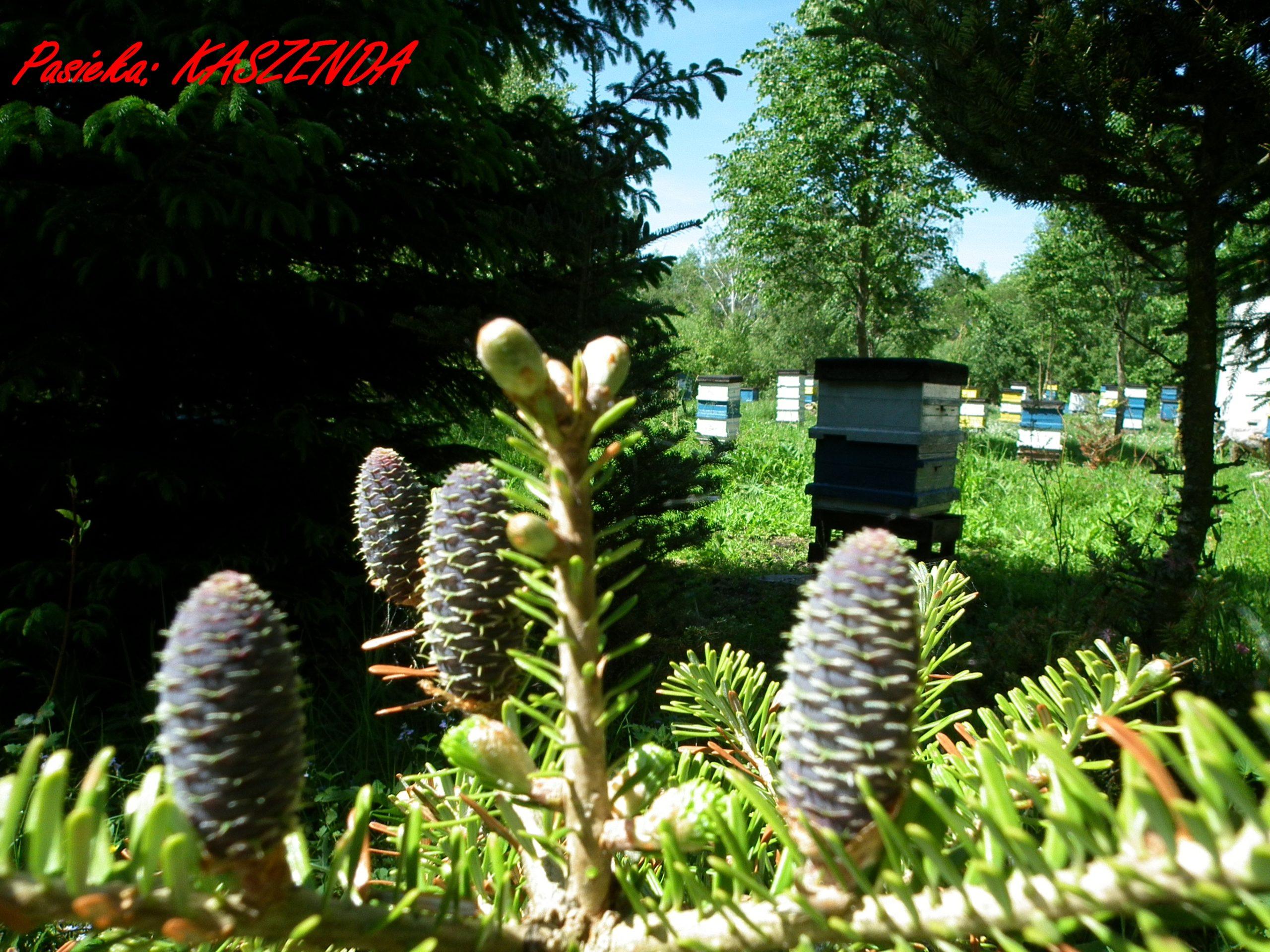 Naturalny miód mazurski, propolis, wosk