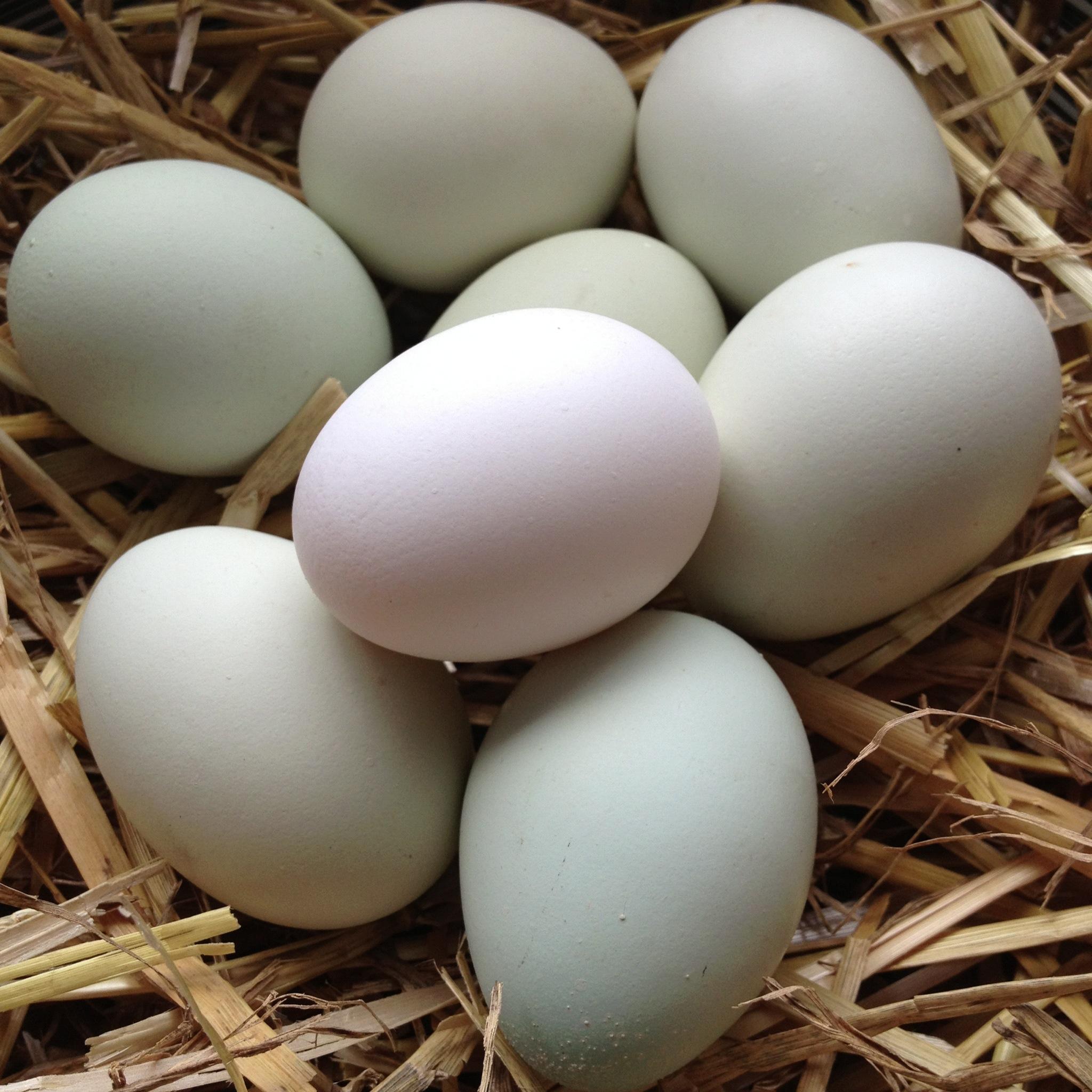 eko jajka